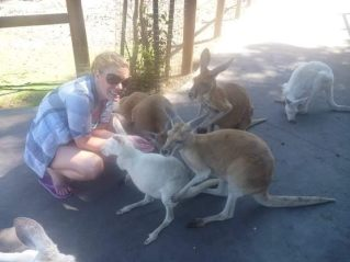 Feeding Kangaroos in Perth Australia