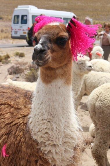 Peruvian Friend